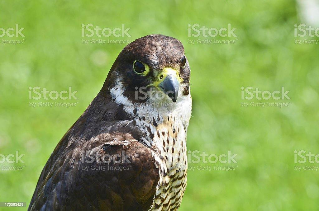 Bird at Cabarceno royalty-free stock photo