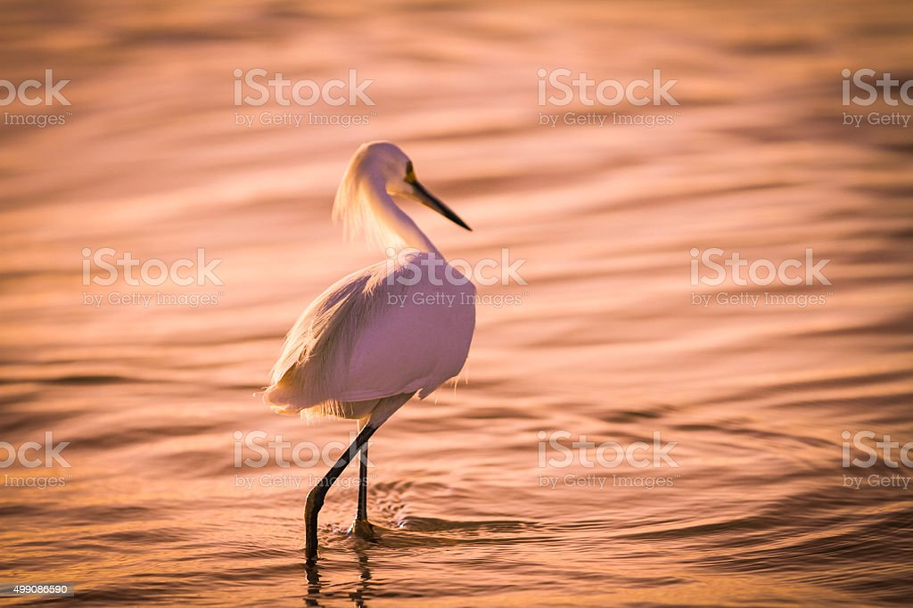 Bird at the Beach stock photo