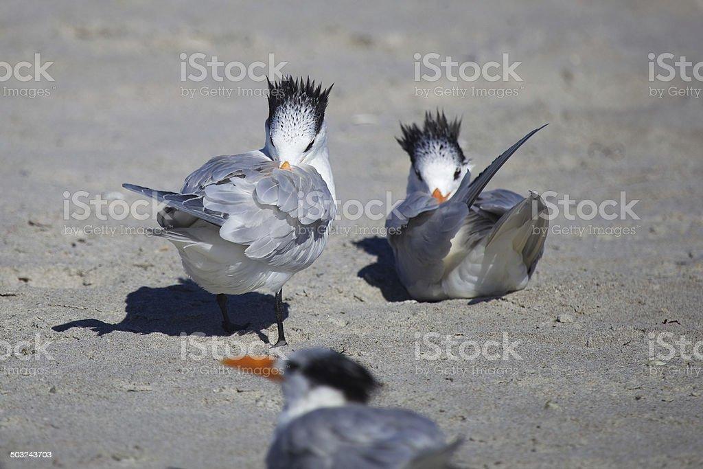 Bird Baths stock photo