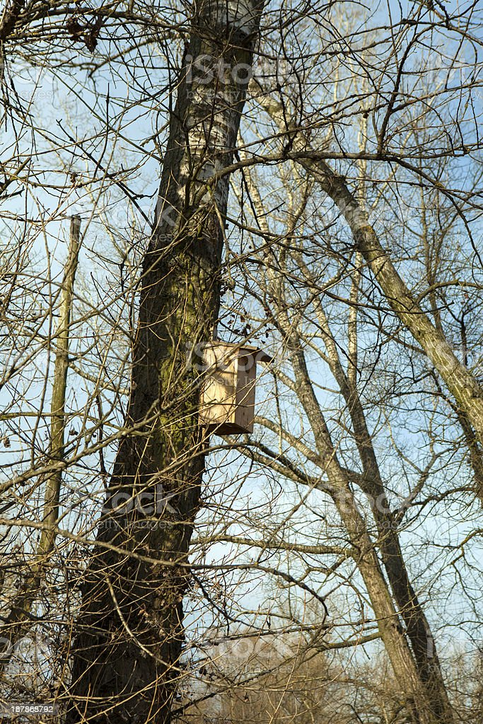 Bird box on a tree in the forest stock photo