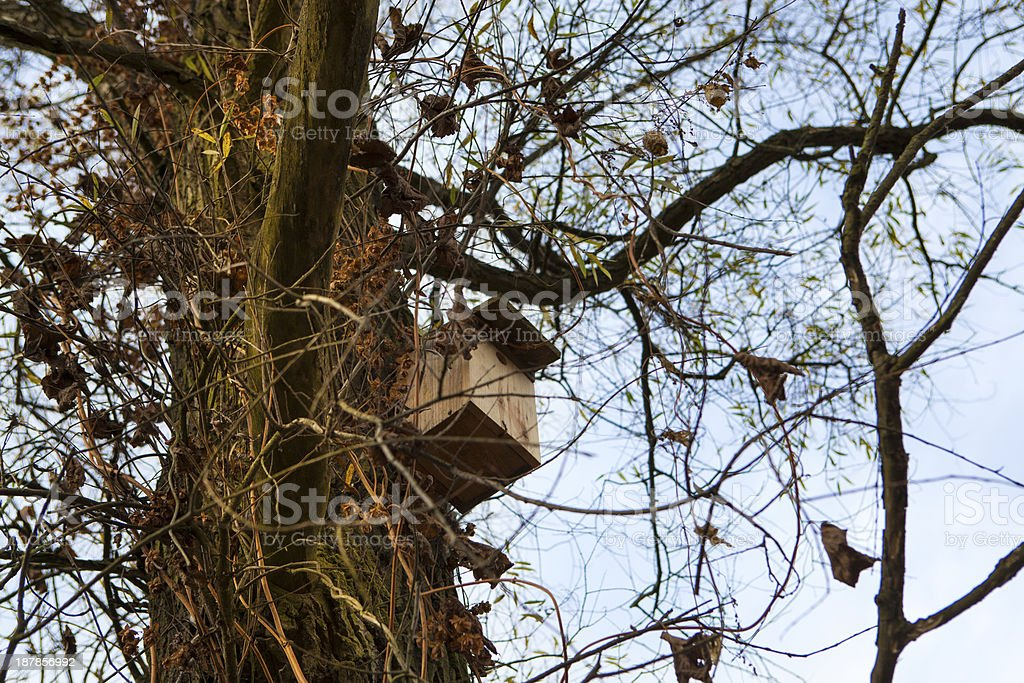 Bird box on a tree stock photo