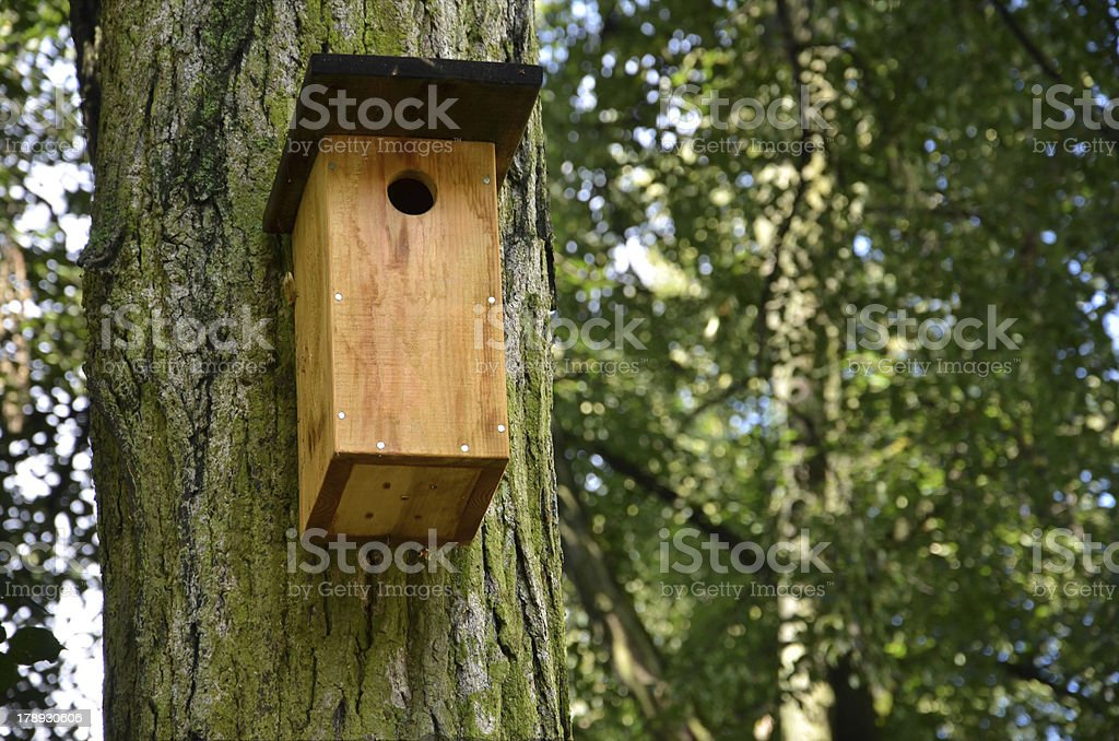 Bird box on the oak tree in forest royalty-free stock photo