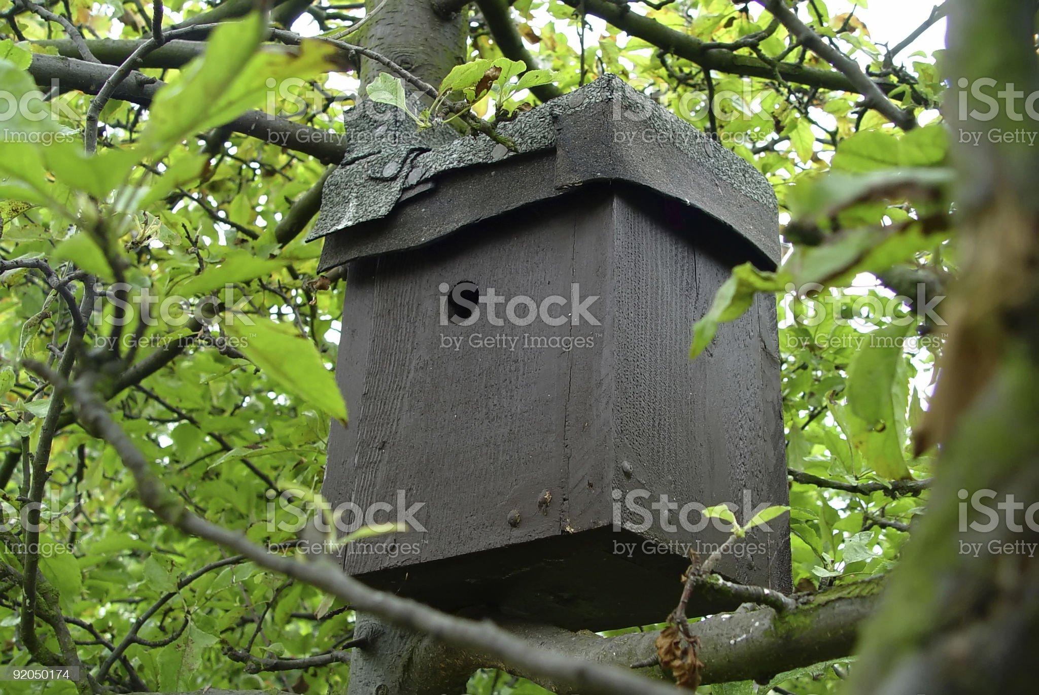 Bird Box royalty-free stock photo