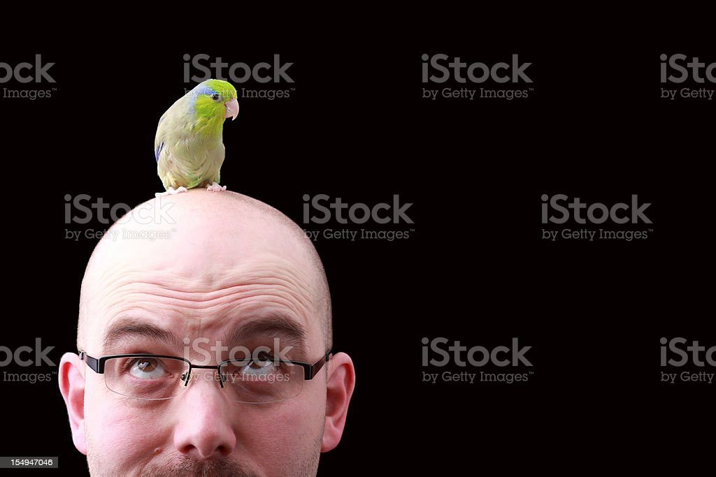 Bird Brain stock photo