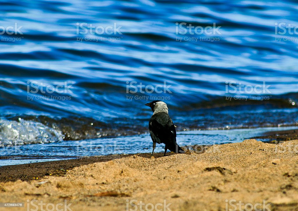 Bird by the sea and the water royalty-free stock photo