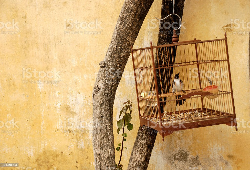 Bird Cage, Hoi An, Vietnam royalty-free stock photo
