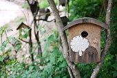 Bird cage made of wood. - May 24