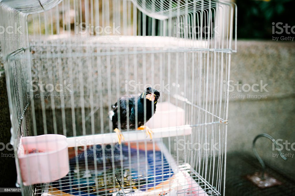 Bird cages, song birds for sale. Hong Kong stock photo