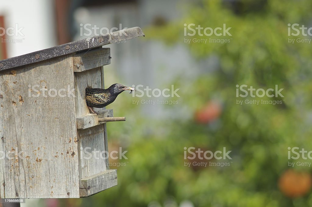 bird catch droppings out to nest . stock photo