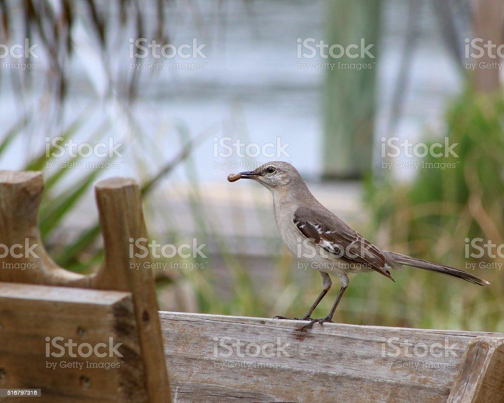 Oiseau capture Ver photo libre de droits