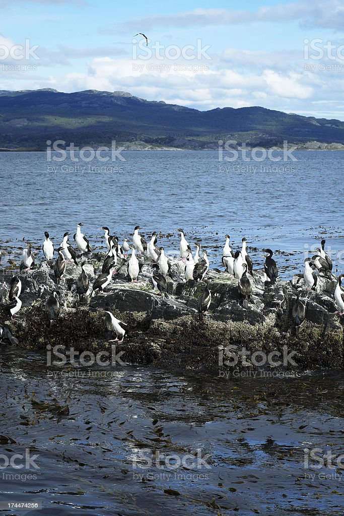 Bird Colony on the Beagle Channel stock photo