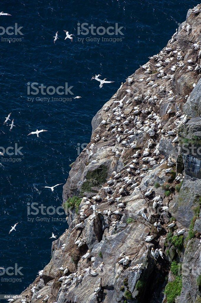 Bird colony on the rock above the sea stock photo