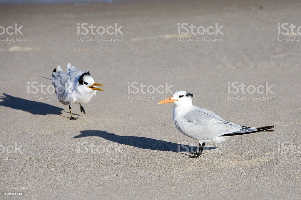 Bird couple communicating on the beach royalty-free stock photo