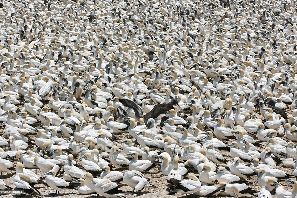 bird crowd stock photo
