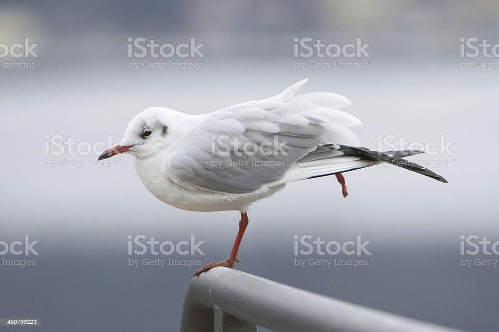 bird dancer stock photo