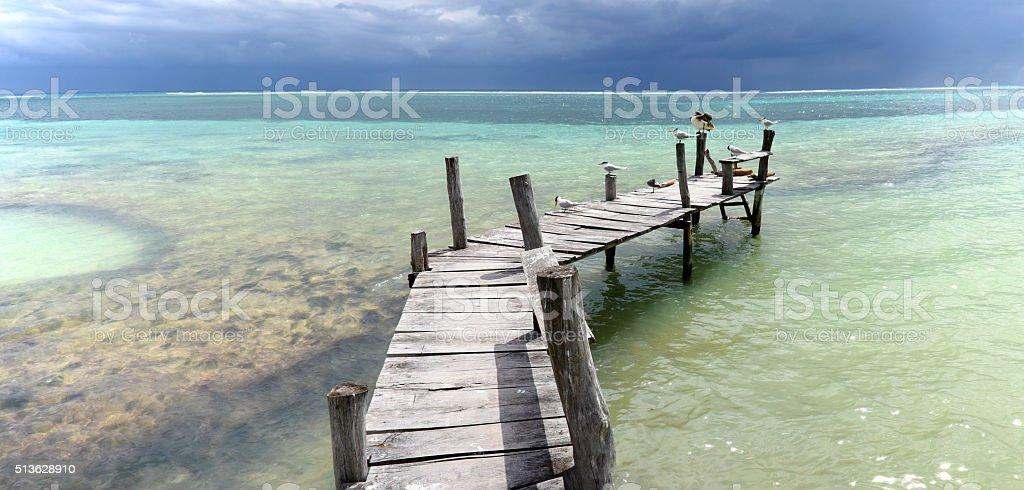Bird dock stock photo