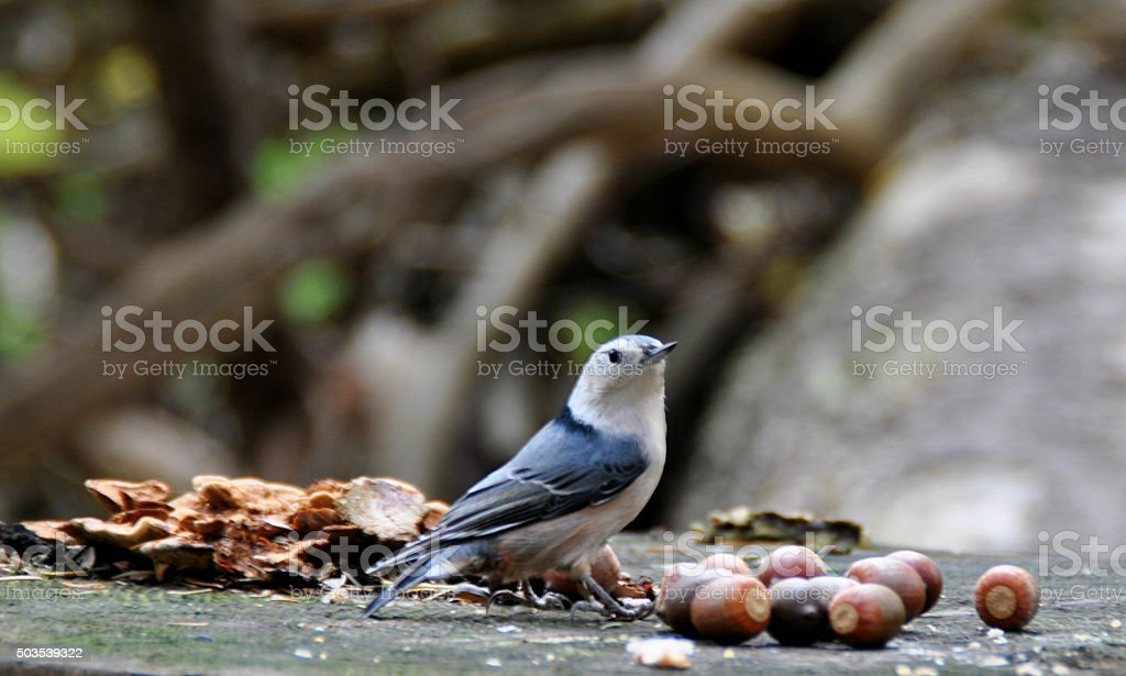 Bird does feed stocks for the winter stock photo