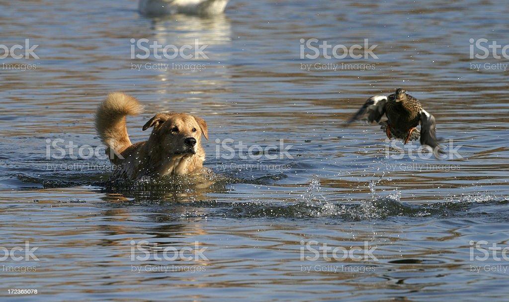 Bird Dog stock photo