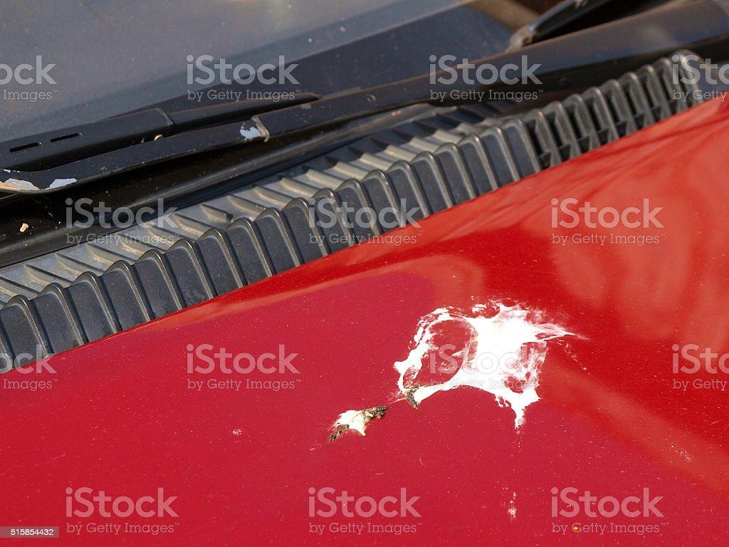 Bird droppings splash on red car body surface