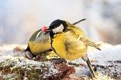 bird eats nuts and seeds in the winter