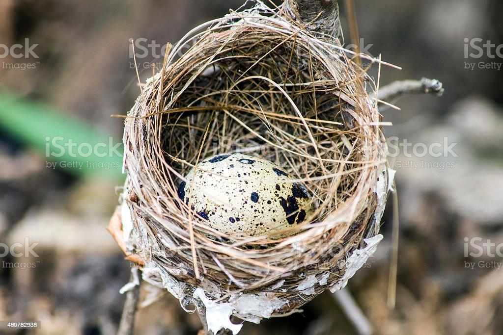 bird egg on nest stock photo