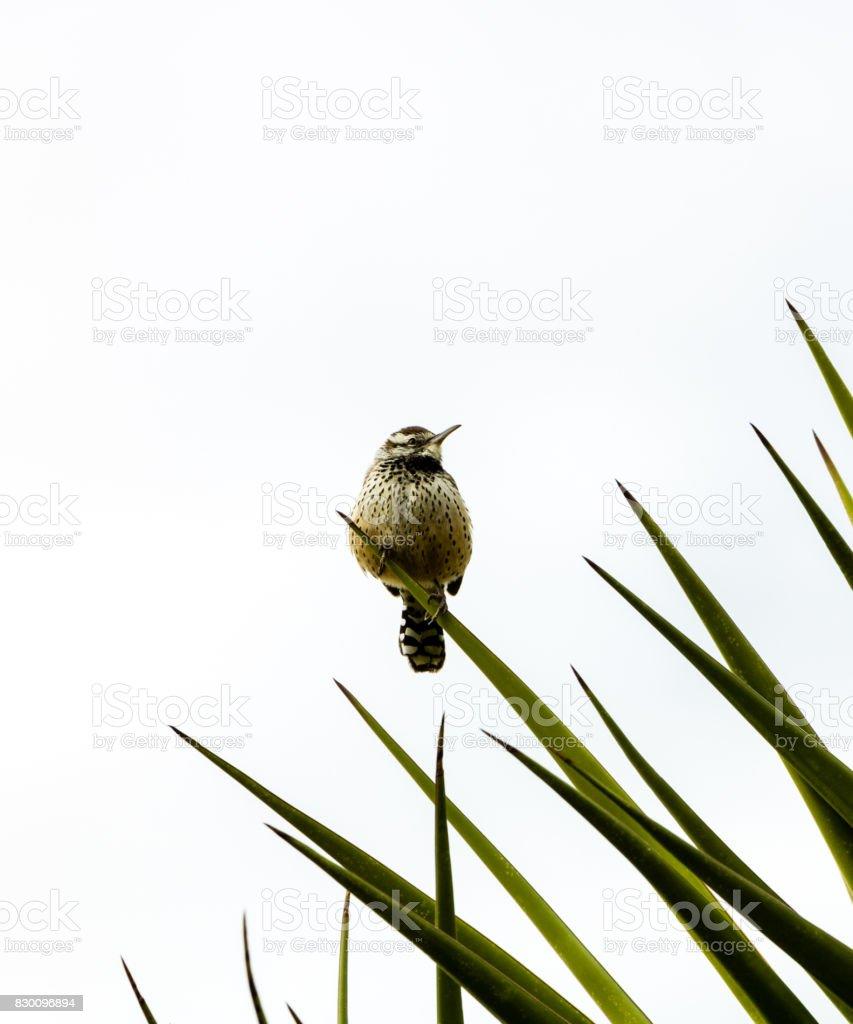 Bird Enjoying the view stock photo