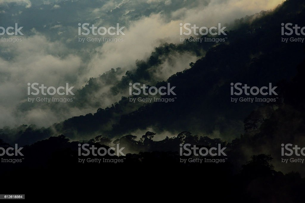 bird eye view dark jungle in the mist stock photo