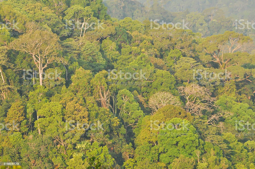 bird eye view tropical forest landscape stock photo