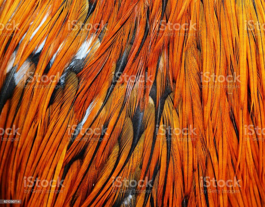 bird feather background stock photo