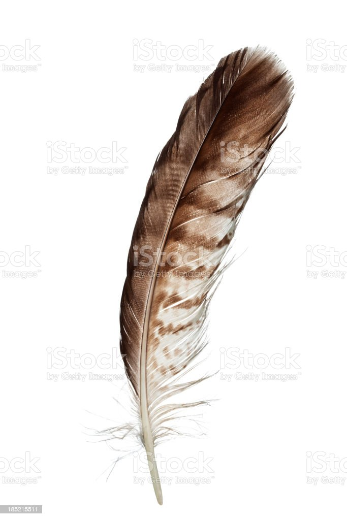 'Bird feather, isolated on white' stock photo