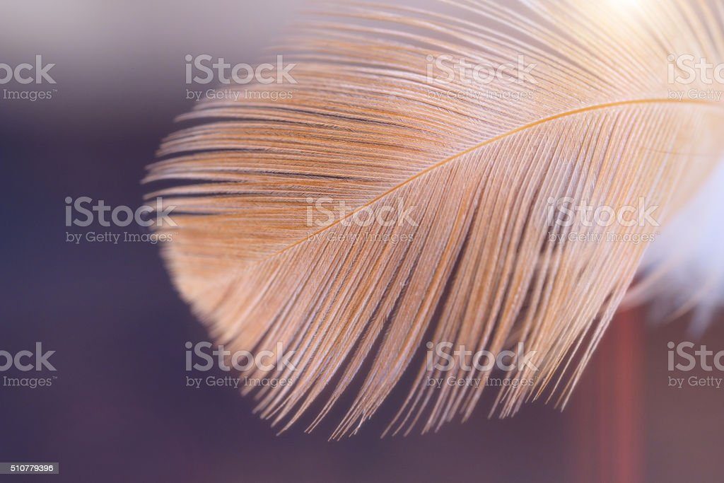 bird feather macro in backlit stock photo