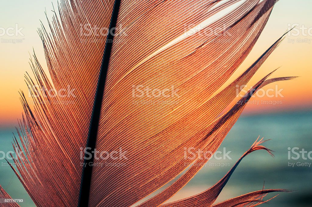 Bird feather on sunset background stock photo