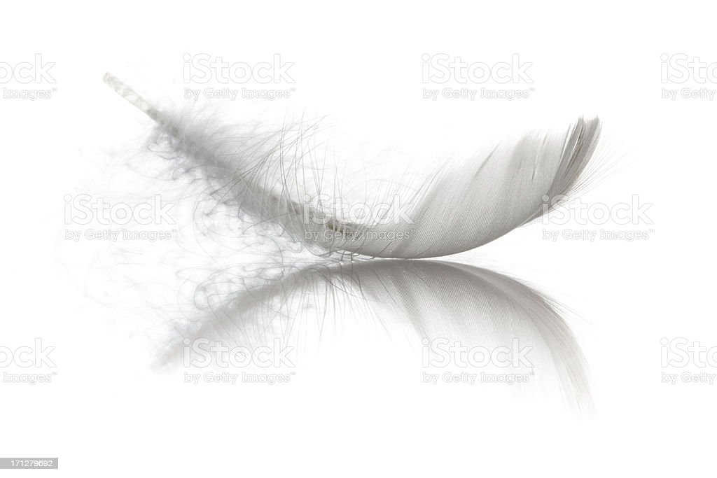 Bird Feather stock photo
