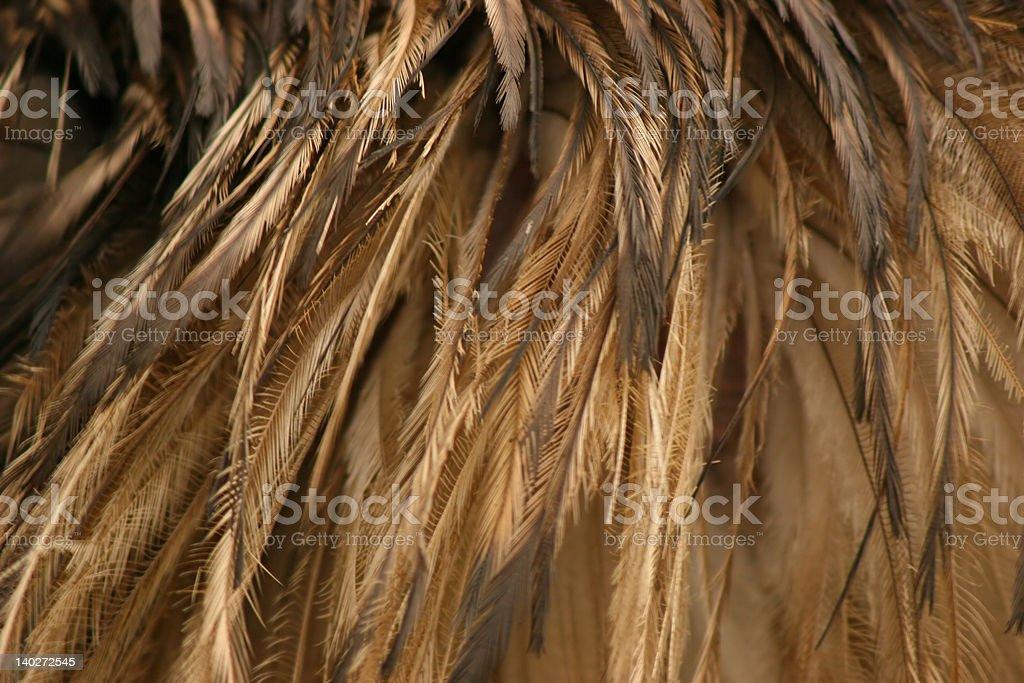 Pájaro Feathers foto de stock libre de derechos