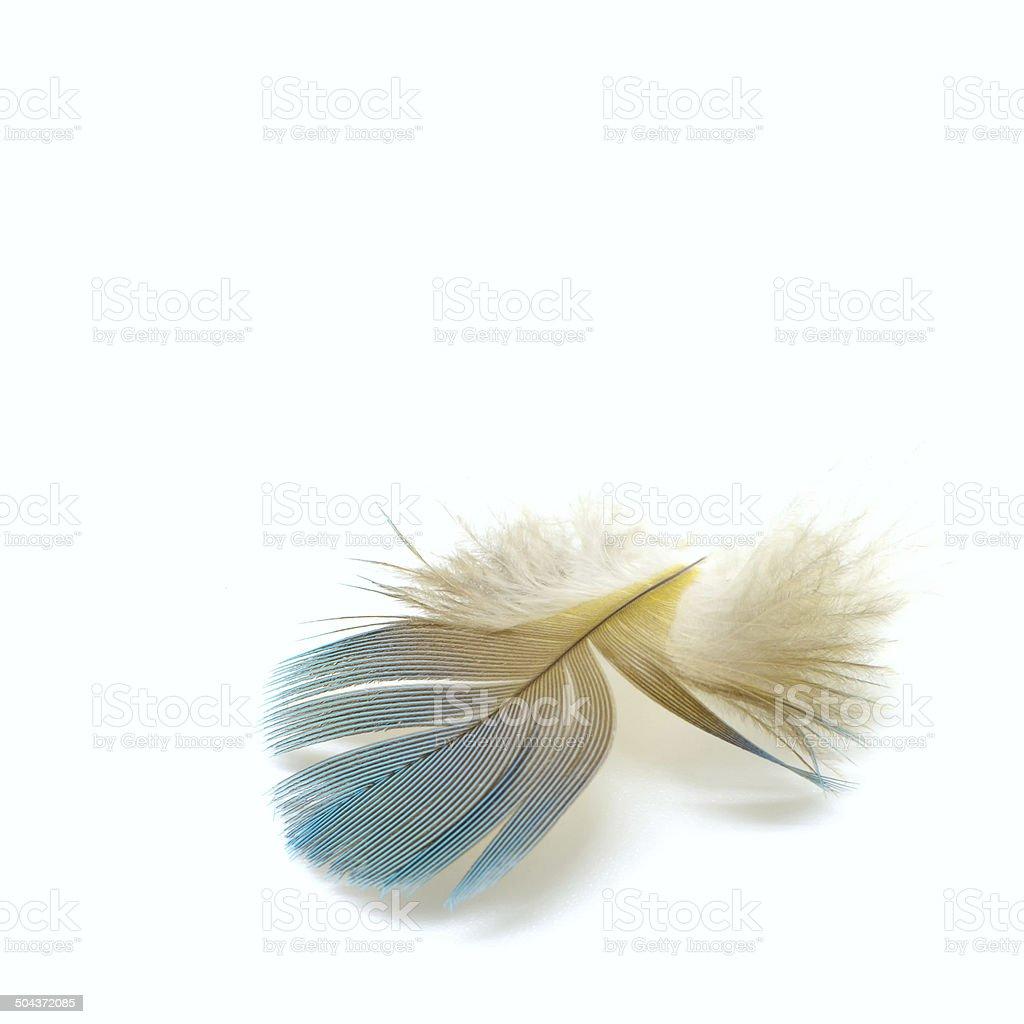bird feathers royalty-free stock photo