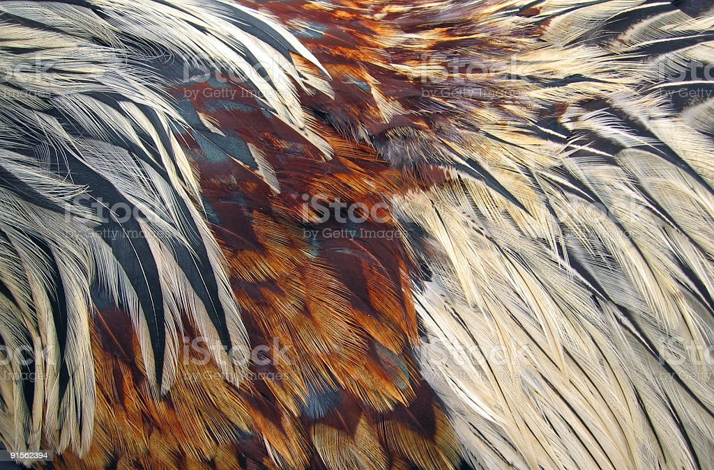 Bird feathers stock photo