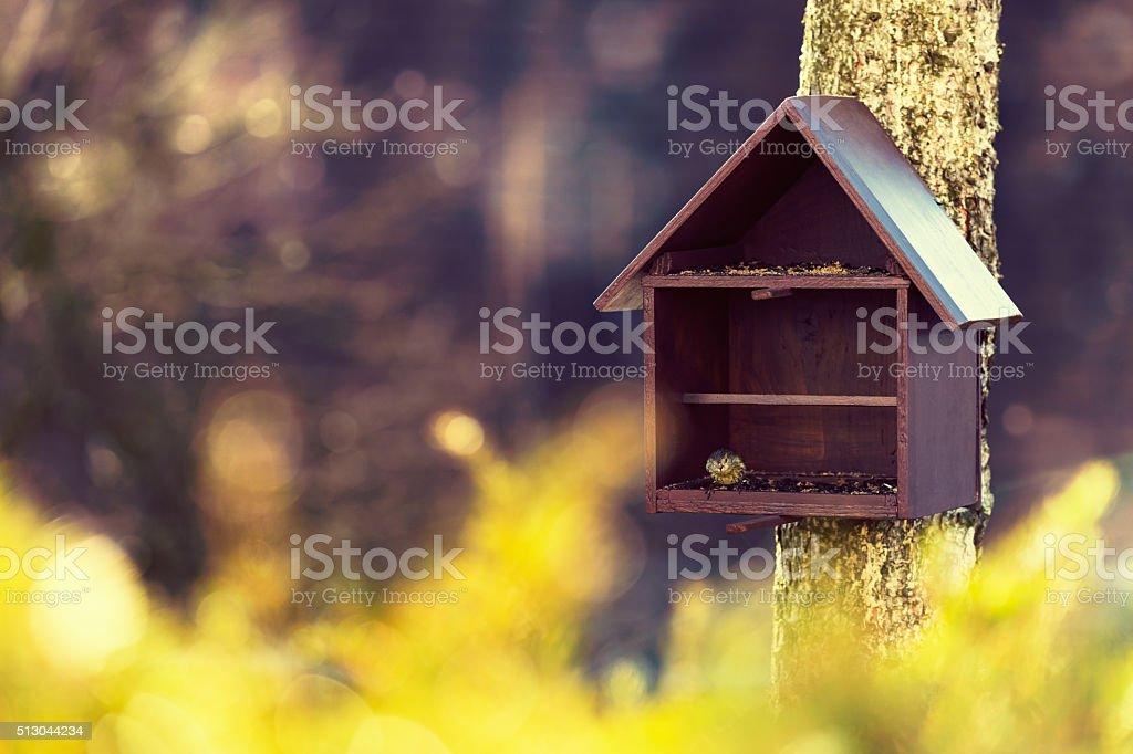 Bird feeder and European siskin stock photo