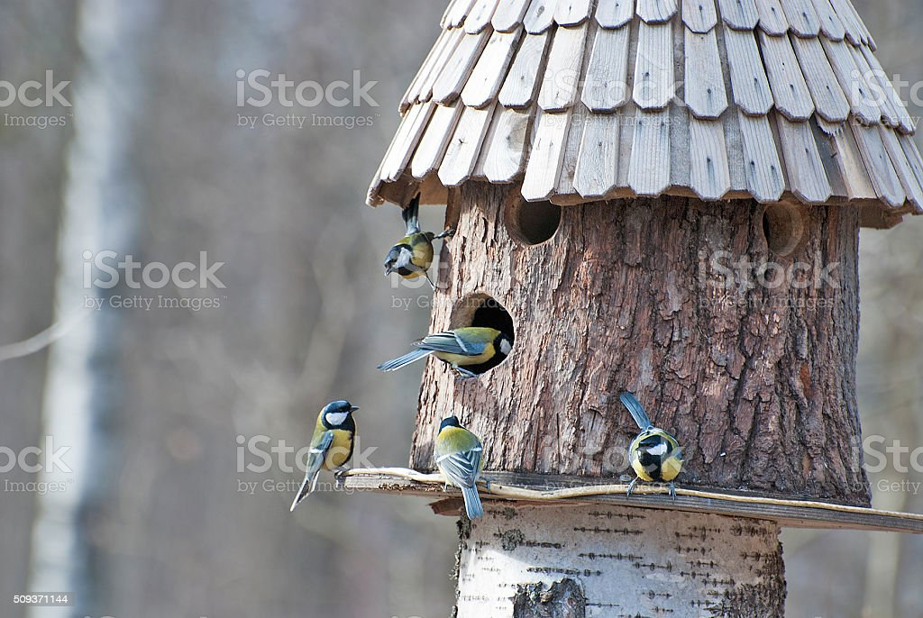 Bird feeder and five birds stock photo