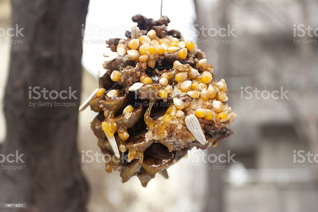 Bird feeder made from pine cone stock photo