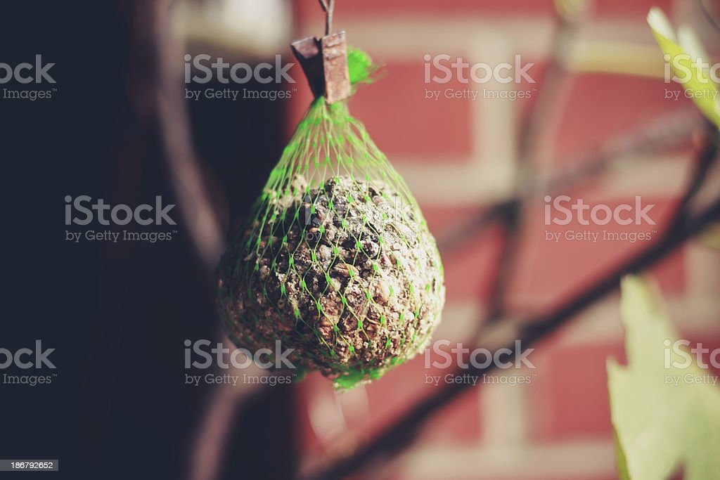Bird feeder outside on winter's day royalty-free stock photo