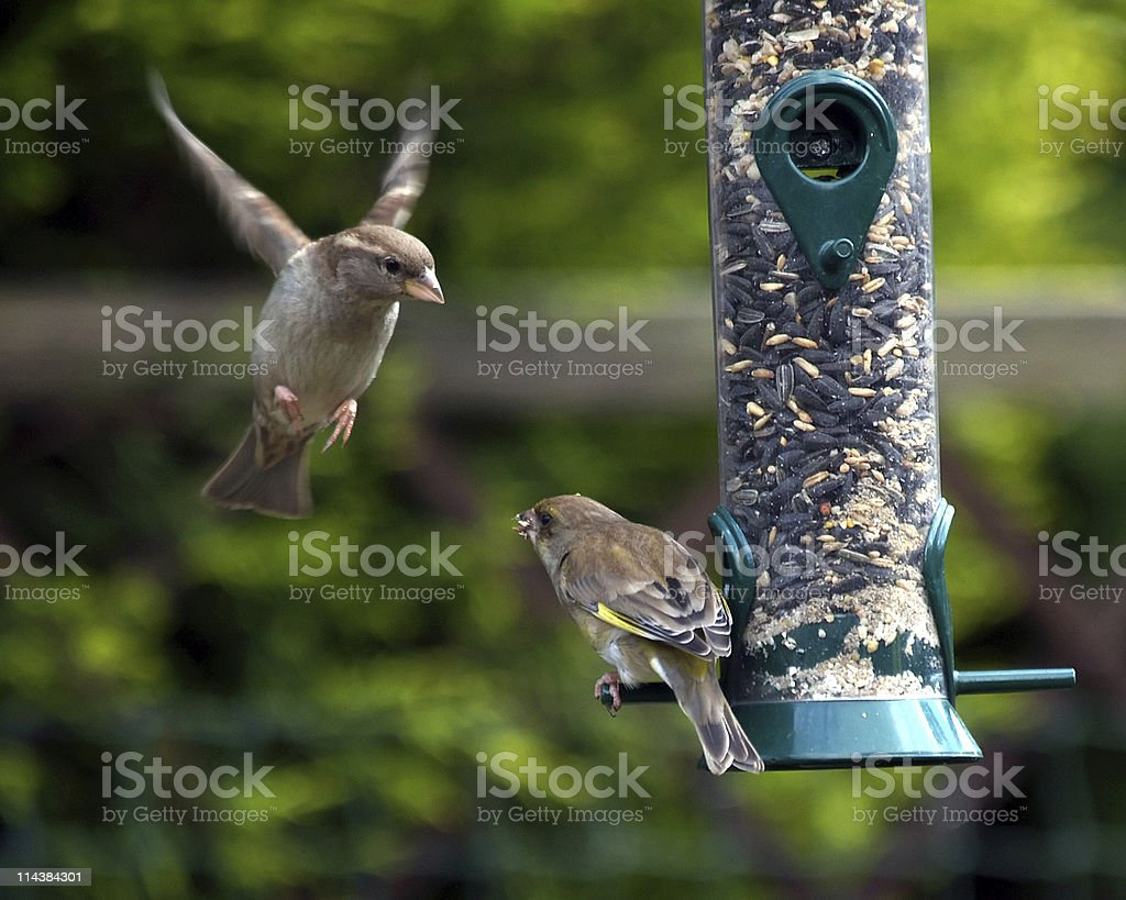 Bird Feeder stock photo