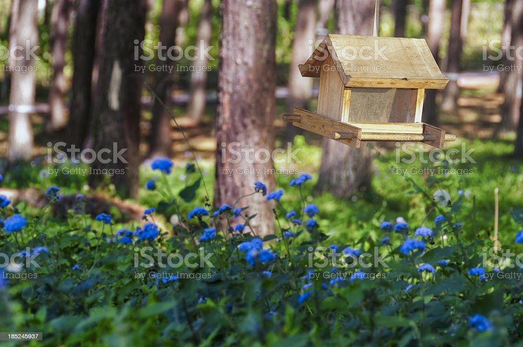 Bird feeder royalty-free stock photo