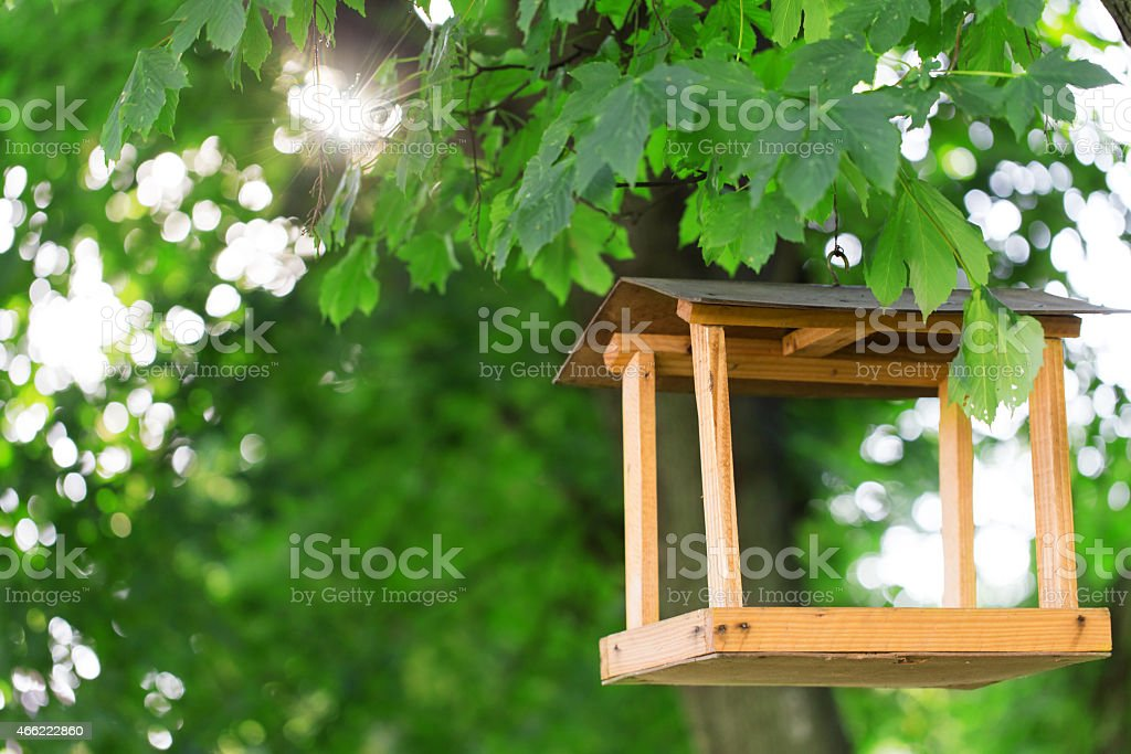 bird feeder trees stock photo