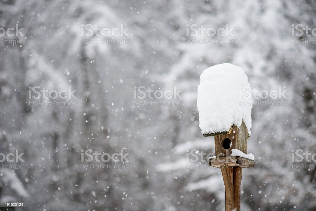 Bird feeder with a hat of winter snow stock photo