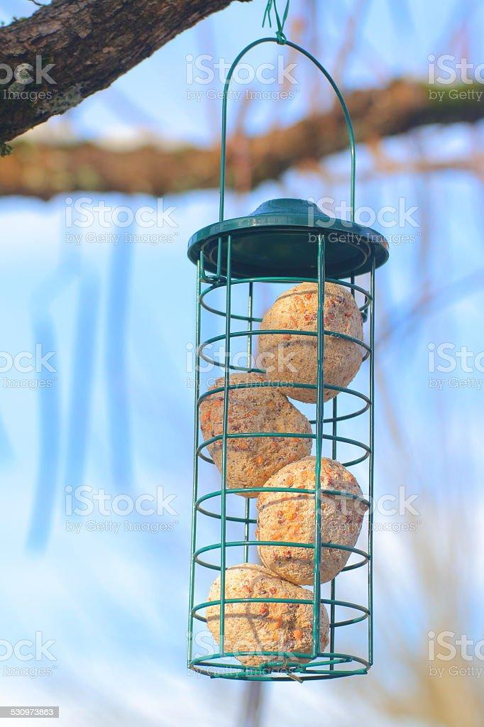 Bird feeder with seeds ready to eat stock photo
