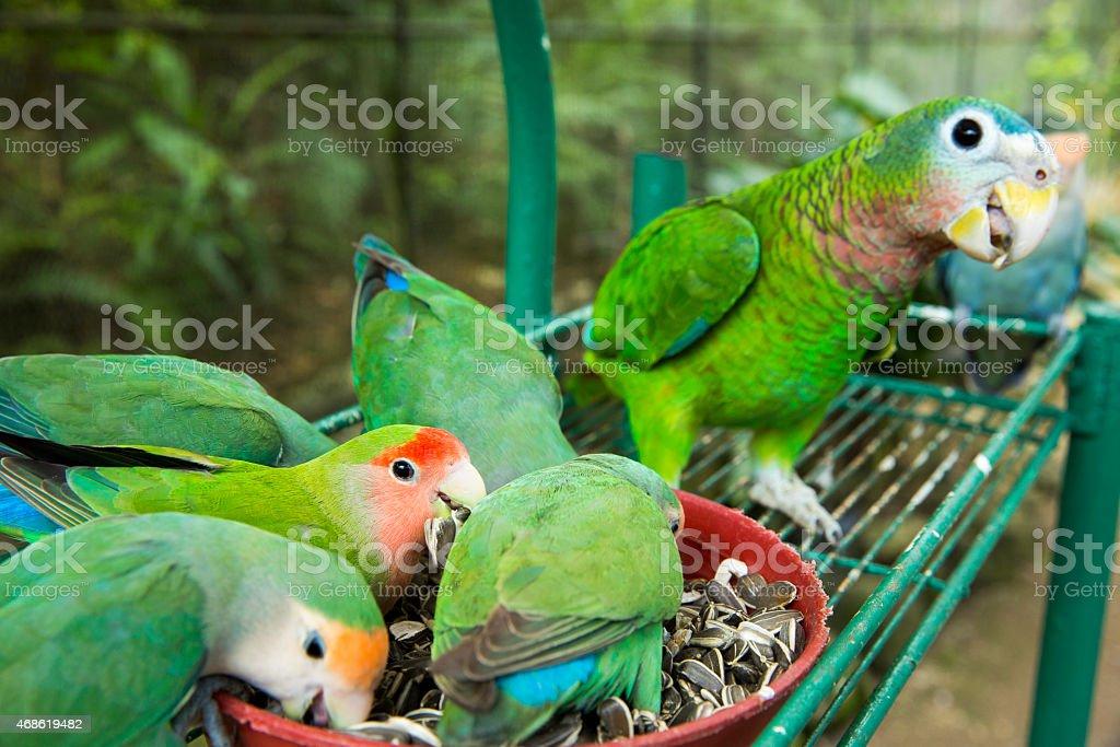 Bird feeding stock photo