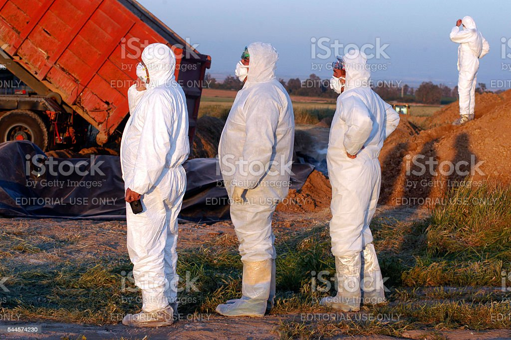 Bird Flu Outbreak stock photo