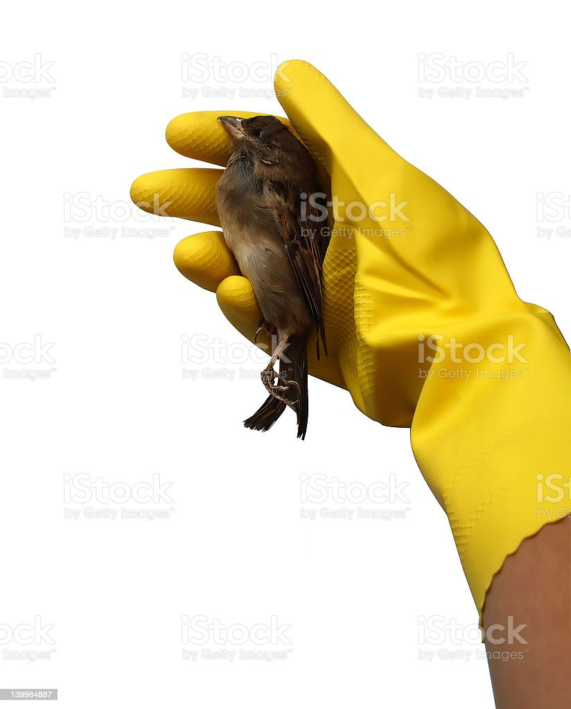 Bird Flu royalty-free stock photo