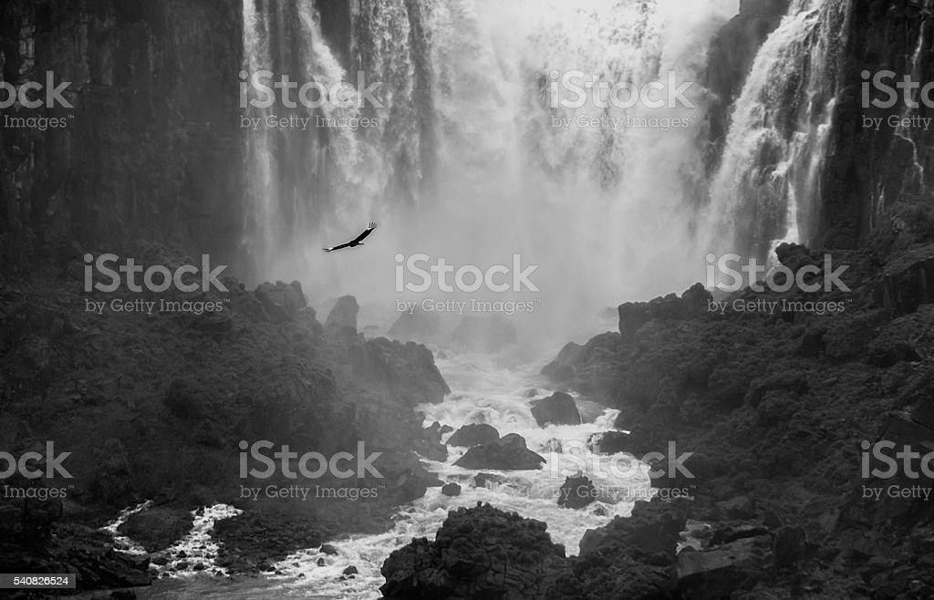 Bird flying in front of Waterfall Monochrome image stock photo