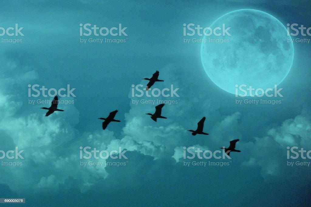 bird flying in night under moon light stock photo